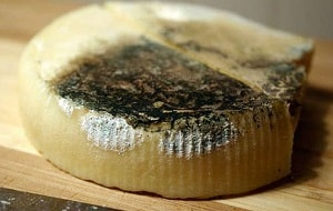 Испорченный сыр