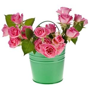 Розовые розочки в зеленом ведерке