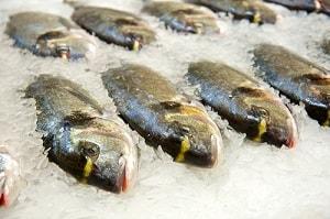 Рыба лежит во льду