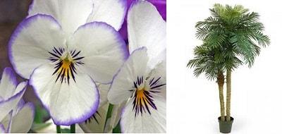 Анютины глазки и пальма