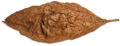 Сушеный лист табака